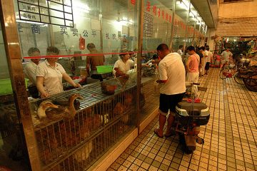 Live poultry market, Shanghai, China. Photo by kdriese on Flickr.