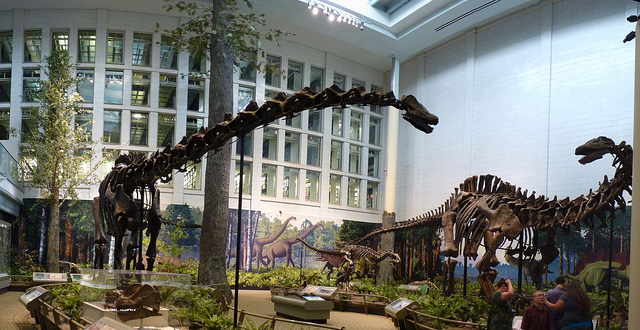 Carnegie Museum of Natural History.